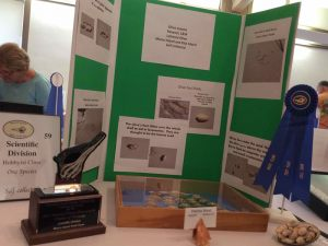 shell_show_2015_img_11
